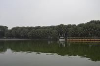 人工湖与棕榈树