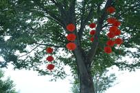 宜兴灯笼与树