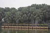 棕榈树树林