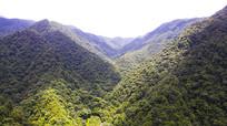 九万山原始森林