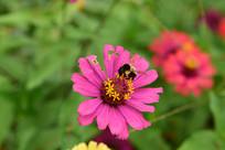 蜜蜂与花朵