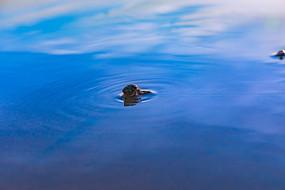 遨游在蓝天上的寄居蟹
