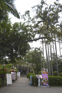 公园树木景观