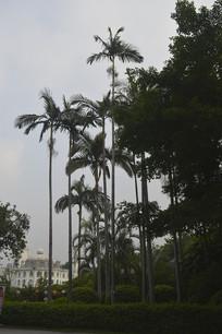 流花湖公园树木
