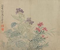 清代恽寿平花卉图册之豆花石竹