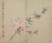 清代恽寿平花卉图册之桃花