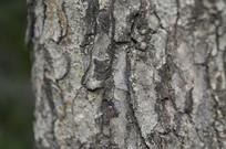 树木的树皮