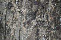 树皮摄影高清图片