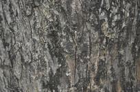 树皮摄影图