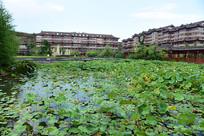 一池荷塘和建筑