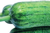 白底上的青翠新鲜绿色丝瓜