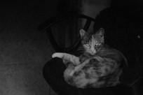 凹造型的猫