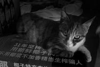 弹眼睛的猫