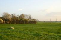 欧洲德国法兰克福初春的灌木丛