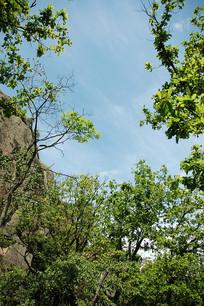 三道关国家森林公园风光