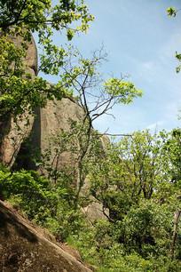 三道关国家森林公园风景