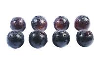 两排新鲜黑紫葡萄