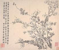 金农梅花图册页