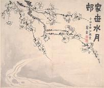 金农梅花图