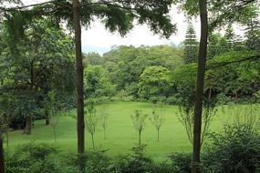 绿色林间草地