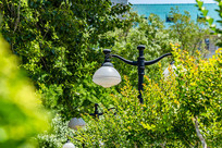 被树叶遮挡的一盏路灯
