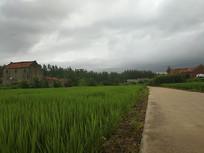 夏日乡村田园