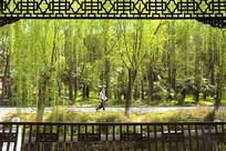 长亭外的包河公园园林