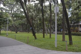 公园路旁的椰子树