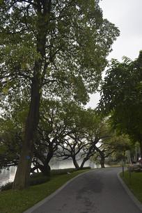 公园树木与道路
