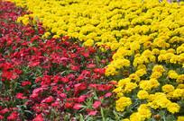 花卉背景摄影图