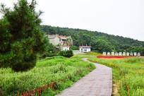 绿色草地间的观景步道