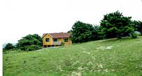 绿色树林中的小木屋