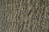 盆架子树皮纹理