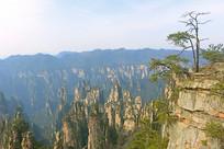 武陵源砂岩峰林山顶