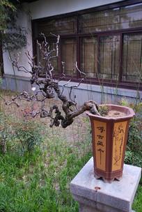 济南盆景奇石园盆景
