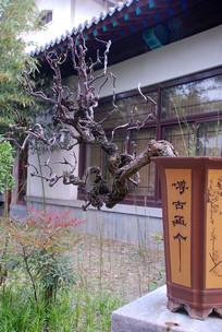 济南盆景奇石园盆栽