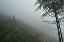 雾中龙脊梯田