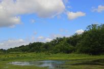 蓝色天空湿地
