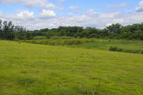 蓝天下的草场