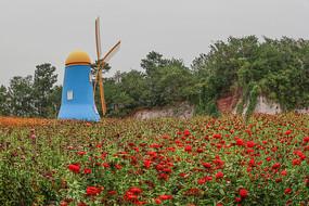 风车与花海