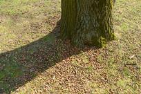 柏林大蒂尔加滕公园掉落的橡子