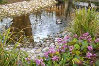 德国哈默尔恩中心公园池塘