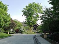 高端住宅区入口主景树