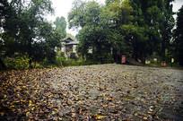 空旷的树林