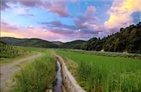 农村田野夕阳红