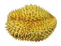 热带著名水果榴莲