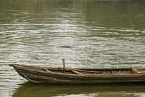 安徽铜陵淡水豚保护区的江豚
