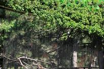 丛林帘幕背景