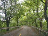 风雨林荫风景