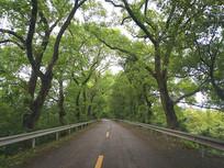 风雨林荫路